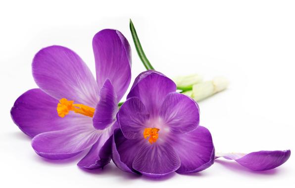 http://dropthemonkey.co/wp-content/uploads/2014/09/purple-flowers.jpg